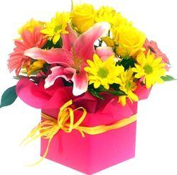 roze kutija